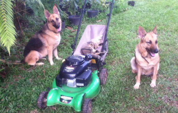 Yum Yum and Gigi with Bruno in the lawnmower