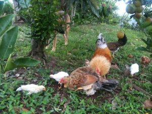 Do You Know where that Chicken and Fish Really Came From? The Ugly and Graphic Truth about Our Food Production Industry